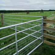 horse-gate-2