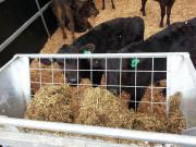 Hook-over-hay-rack-920-2