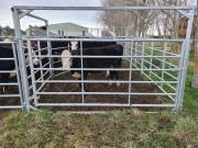 6-rail-gates-hurdle-frames-2