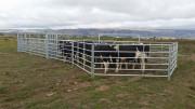 cattle-hurdles-2